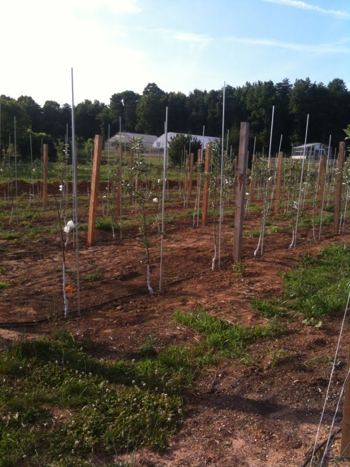 orchard6.12.jpg